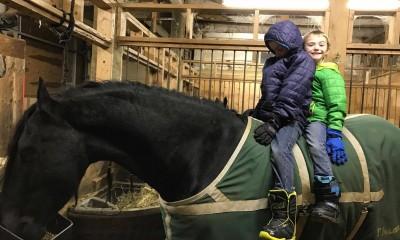 55500e869ce SARNASED KUULUTUSED. Incredible Black Friesian Horse For Sale
