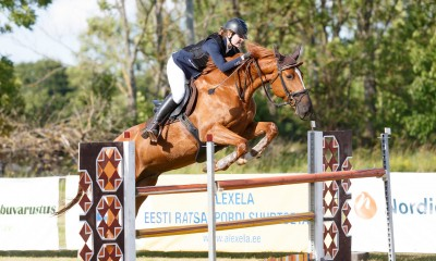 A nice and kind-hearted showjumping gelding for sale