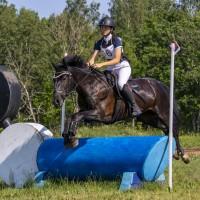 For sale 7yo Estonian native horse Viiva