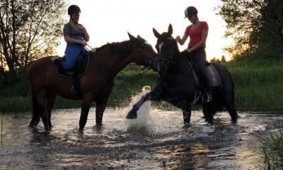 Horse for amateur/children