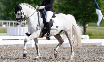 FEI dressage pony Herr Ilves